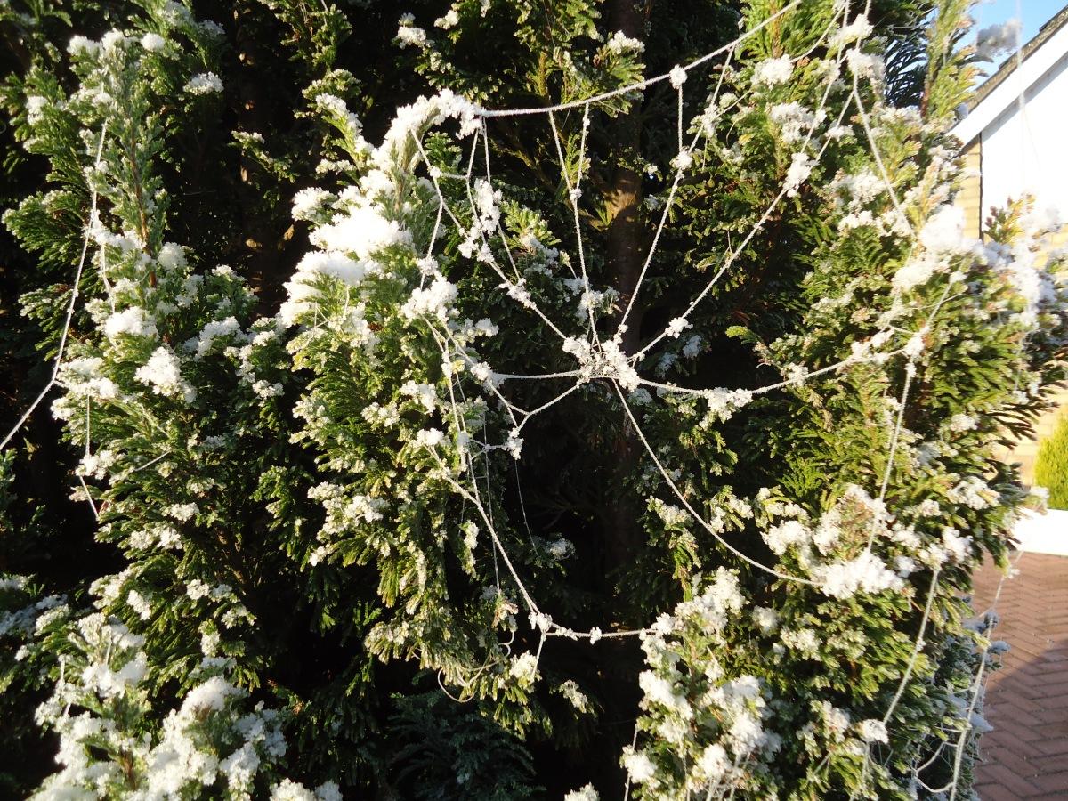 spider web ice