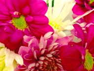 Flowers pink white